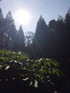 isumi_woods